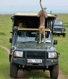 Safarilandcruiser.jpg